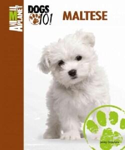 Maltese (Hardcover)