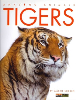 Tigers (Paperback)