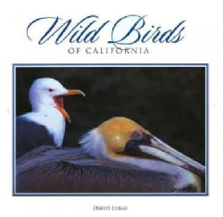 Wild Birds of California (Hardcover)