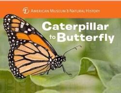 Caterpillar to Butterfly (Board book)