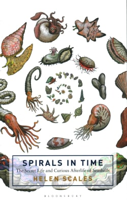 Spirals in Time: The Secret Life and Curious Afterlife of Seashells (Hardcover)