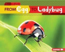 From Egg to Ladybug (Hardcover)