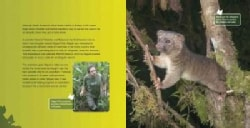 The Search for Olinguito: Discovering a New Species (Hardcover)