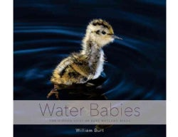 Water Babies: The Hidden Lives of Baby Wetland Birds (Hardcover)