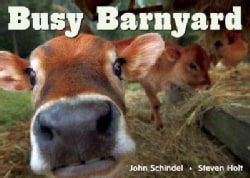 Busy Barnyard (Board book)