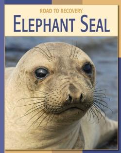 Elephant Seal (Hardcover)