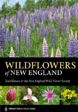 Wildflowers of New England (Paperback)