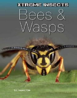 Bees & Wasps (Hardcover)