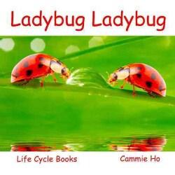 Ladybug Ladybug (Paperback)