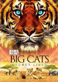 Big Cats: Secret Lives (DVD)