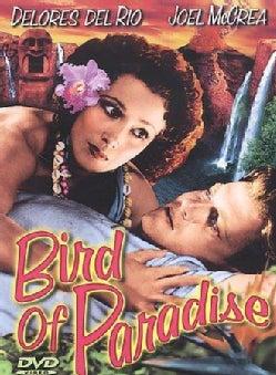 Bird Of Paradise (DVD)
