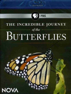 Incredible Journey Of The Butterflies (Blu-ray Disc)