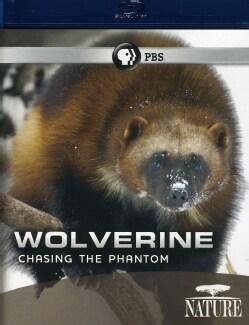 Nature: Wolverine: Chasing The Phantom (Blu-ray Disc)