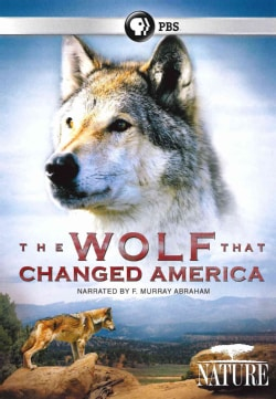 Nature: The Wolf That Changed America (DVD)