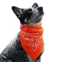 Paisley Dog Bandana - Orange - One Size