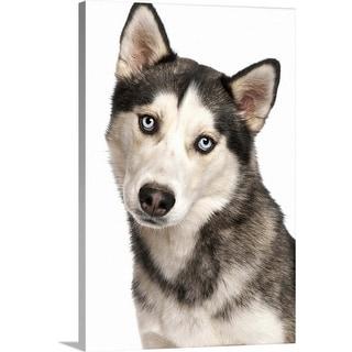 """Siberian Husky puppy"" Canvas Wall Art"