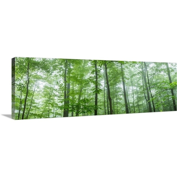 """Trees in a forest, Hamburg, New York State"" Canvas Wall Art"