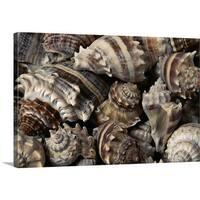 Premium Thick-Wrap Canvas entitled Seashells - Multi-color