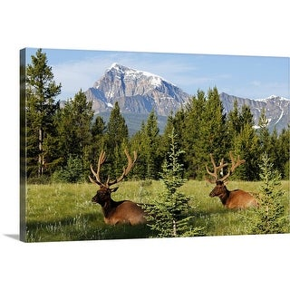 """Elks at Bow Valley, Banff Nationalpark, Alberta, Canada"" Canvas Wall Art"