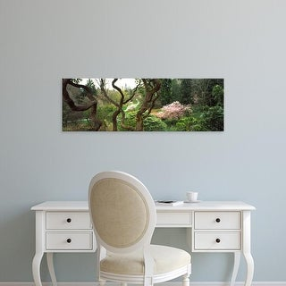 Easy Art Prints Panoramic Image 'Tree and plants in a park, Washington Park, Seattle, Washington State' Canvas Art