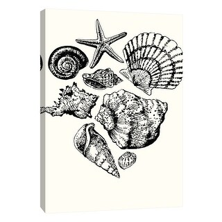 """PTM Images 9-108661  PTM Canvas Collection 10"""" x 8"""" - """"Shells 1"""" Giclee Shells Art Print on Canvas"""