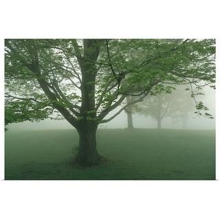 """Trees in fog"" Poster Print"
