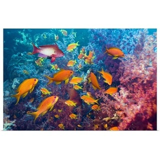"""""""Goldies and soft coral"""" Poster Print"""