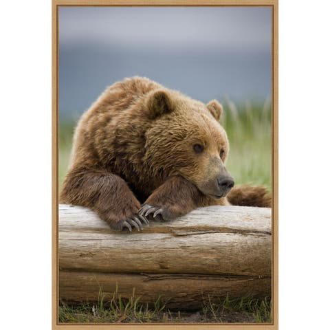 Brown Bear resting on a beached log by Paul Souders Framed Canvas Art