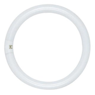 "Satco S6504 FC12T9/D-Circline Fluorescent Tube, Daylight, 12"", 32W"