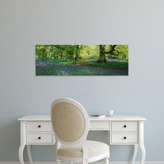 Easy Art Prints Panoramic Image 'Bluebells in a forest, Thorp Perrow Arboretum, North Yorkshire, England' Canvas Art