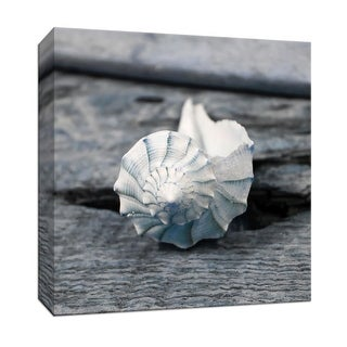 """PTM Images 9-147638  PTM Canvas Collection 12"""" x 12"""" - """"Driftwood Shell II"""" Giclee Shells Art Print on Canvas"""