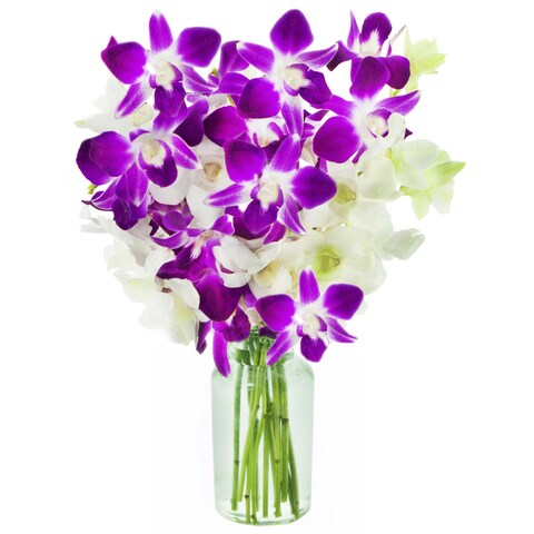 KaBloom: Opal Orchids Bouquet of 5 White & 5 Purple Dendrobium Orchids from Thailand with Vase