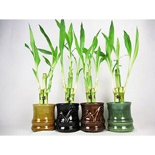 Live 3 Style Party Set of 4 'Bamboo' Plant Arrangement w/ Ceramic Vase