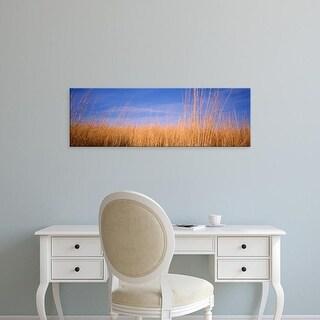 Easy Art Prints Panoramic Images's 'Prairie Grass, Blue Sky, Marion County, Illinois, USA' Premium Canvas Art