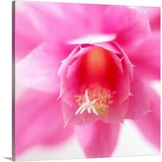 """""""Epiphyllum flower detail"""" Canvas Wall Art"""