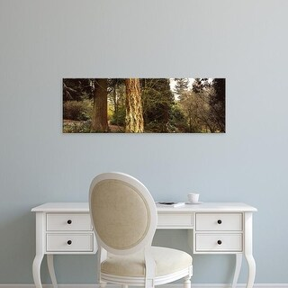 Easy Art Prints Panoramic Image 'Trees in a park, Washington Park, Seattle, Washington State, USA' Premium Canvas Art