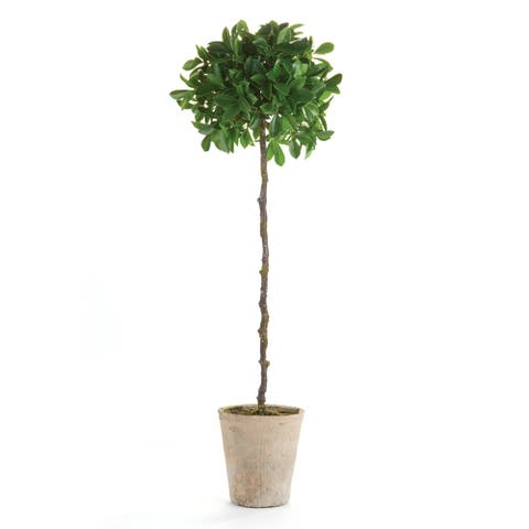 """Ficus Topiary Potted 35"""""""