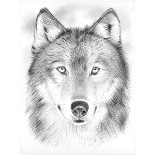 """Sketching By Number Kit 8""""X12""""-Wolf"""