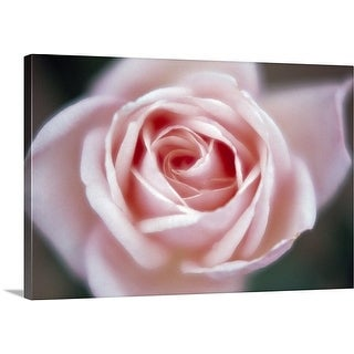 Premium Thick-Wrap Canvas entitled Close up of a pink rose