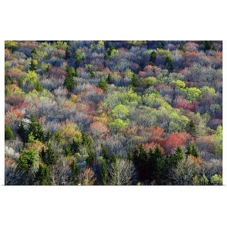 """High angle view of Appalachian hardwood forest, Blue Ridge Parkway, spring, North Carolina"" Poster Print"