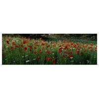 Poster Print entitled Wildflowers, NCDOT Wildflower Program, Swain County, North Carolina - multi-color