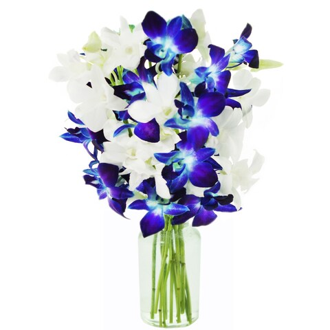KaBloom: Starry Night in the Tropics Bouquet of 5 Blue & 5 White Dendrobium Orchids with Vase