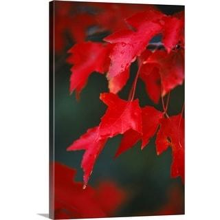 """autumn leaves"" Canvas Wall Art"