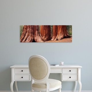 Easy Art Prints Panoramic Images's 'Trees at Sequoia National Park, California, USA' Premium Canvas Art