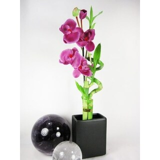 9GreenBox - Lucky 'Bamboo' Spiral Style w/ Silk Orchid Flower and Vase