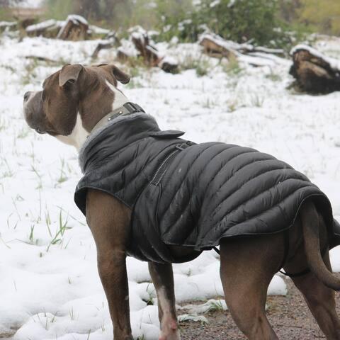 Alpine Extreme Weather Puffer Dog Coat by Doggie Design - Black