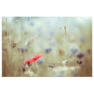 """Red poppy, blue cornflowers"" Poster Print"
