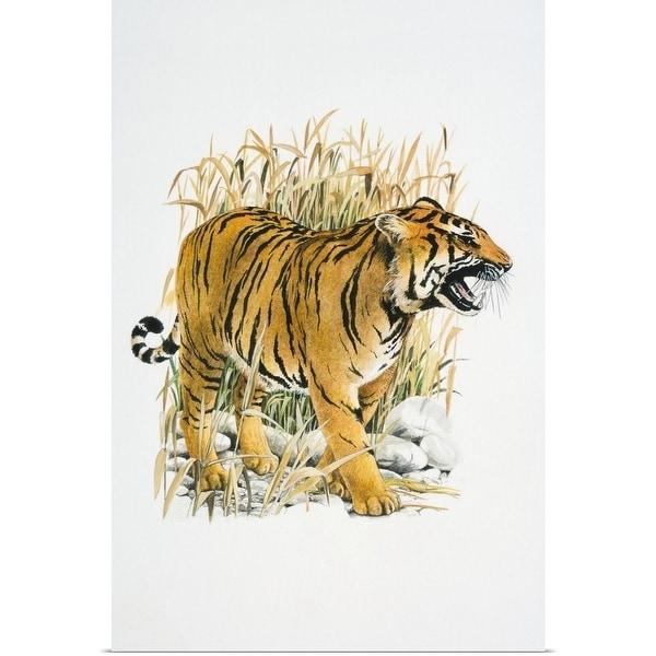 Shop Illustration of roaring Tiger in reeds - Multi-color