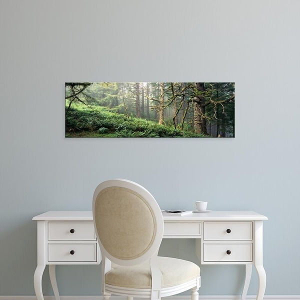 Easy Art Prints Panoramic Image 'Sitka Spruce (Picea sitchensis) trees in a forest, Ecola Park, Oregon' Canvas Art