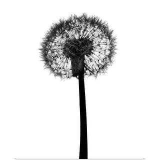 """Silhouette of dandelion"" Poster Print"